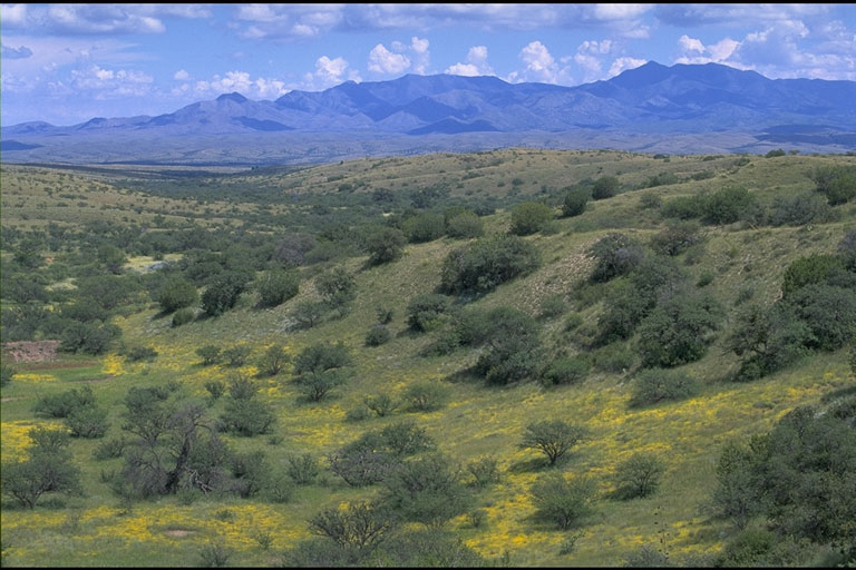 Sonoita Valley Planning Partnership